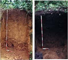 Normalt er humuslaget i tropeskogen veldig grunt. Ved tilførsel av trekull og organiske dyr og planterester klarte de å bygge det dype fruktbare Tera Preta jordsmonnet - et jordlag som fortsatt er stabilt og fruktbart etter mange hundre år.