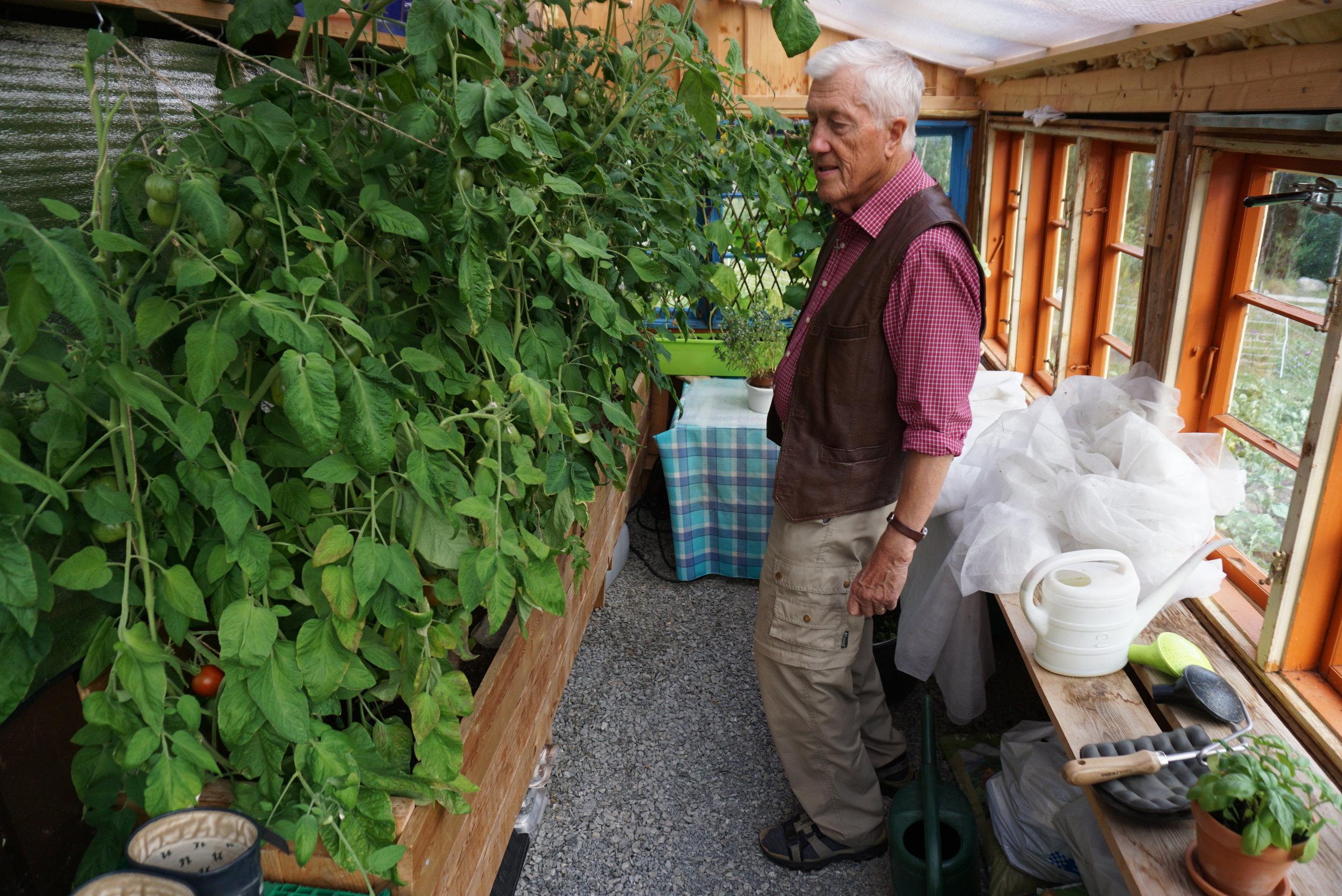 Veksthuset fylles opp med tomatplanter. Bilde fra august 2018