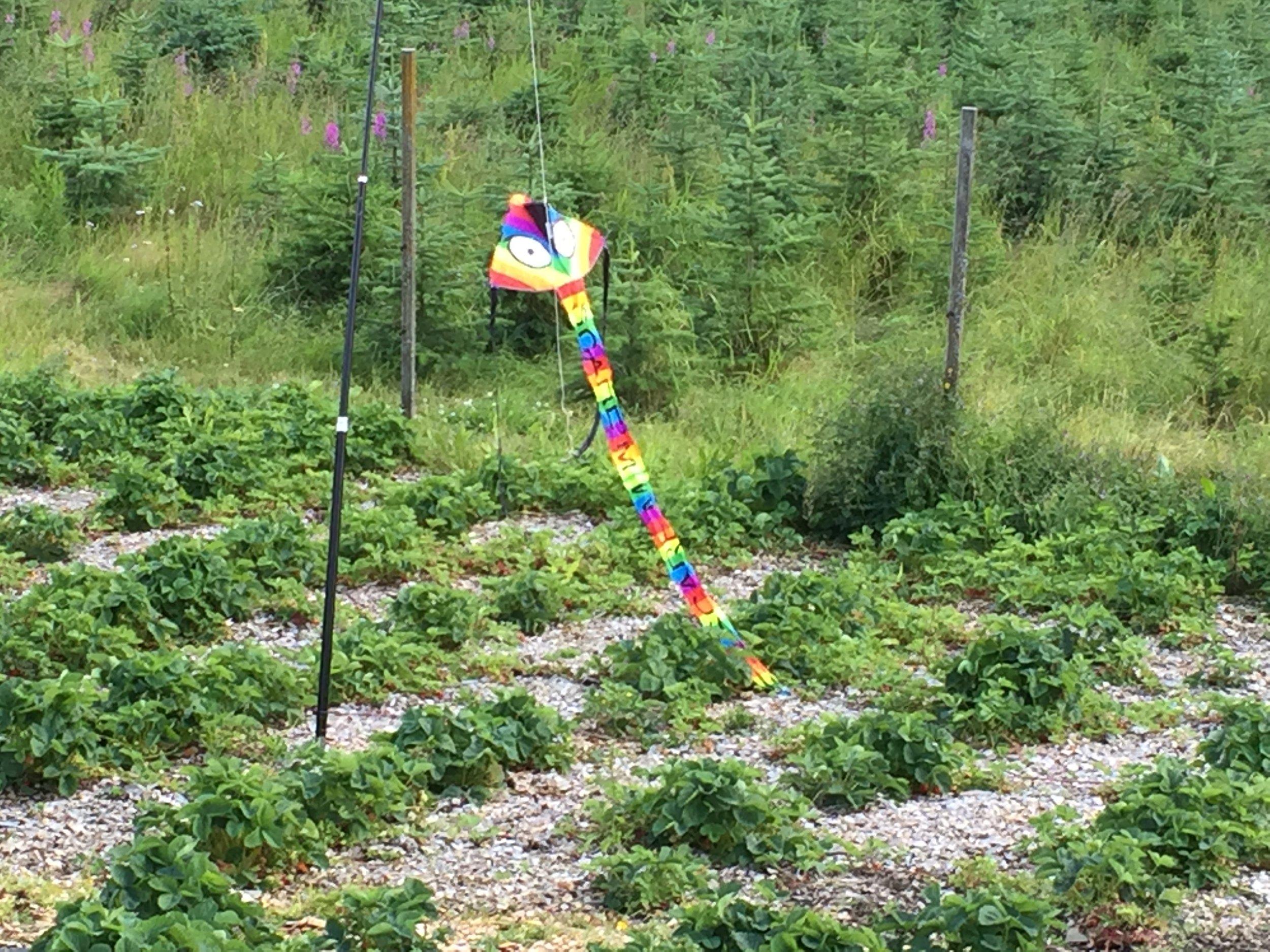 Diverse forsøk på fugleskremcing har kort levetid. Fuglene avslører det fort.