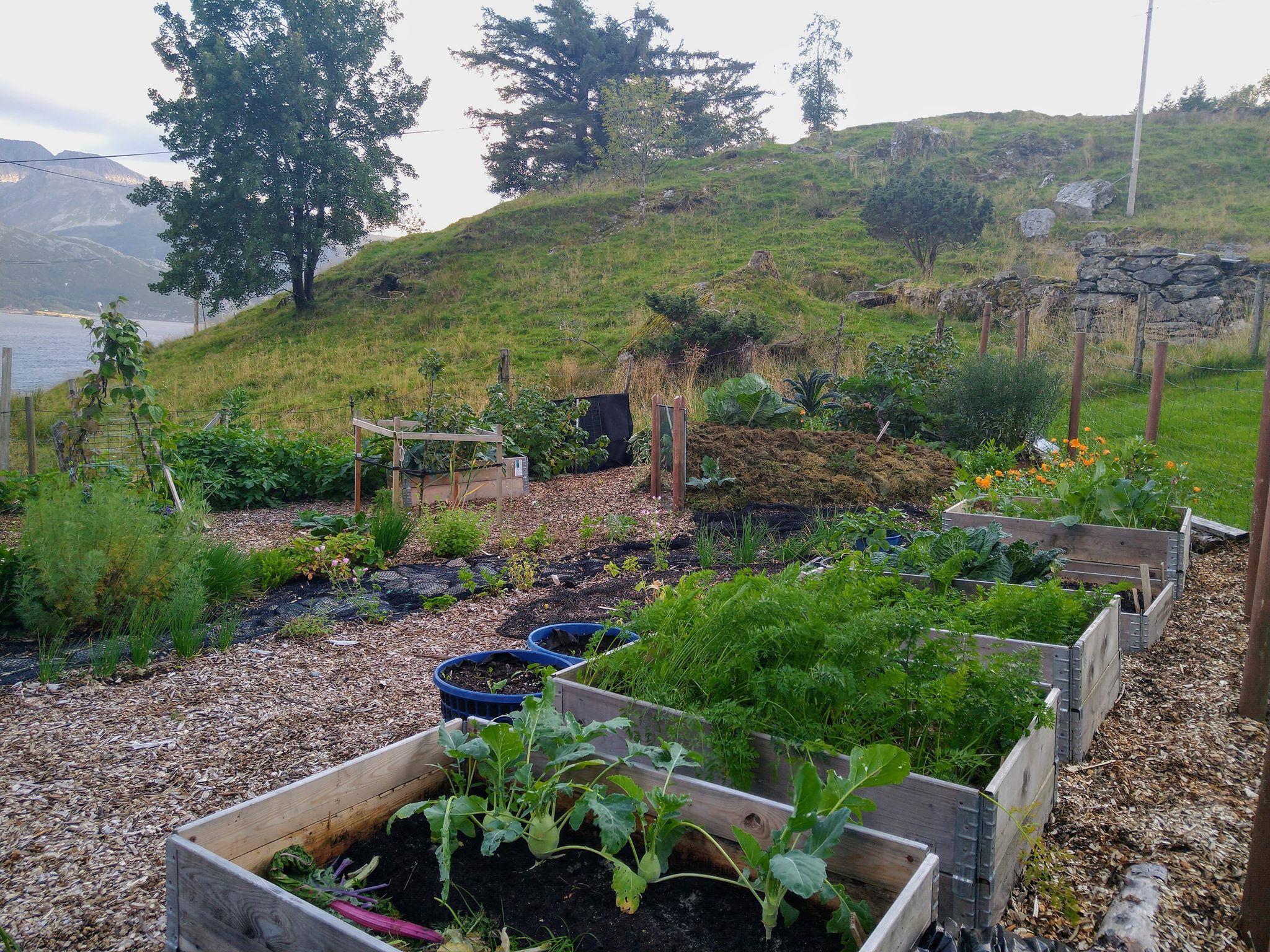 Ved å dyrke i ulike bed får jeg lettere fulgt jordtemperaturutviklingen under ulike forhold.