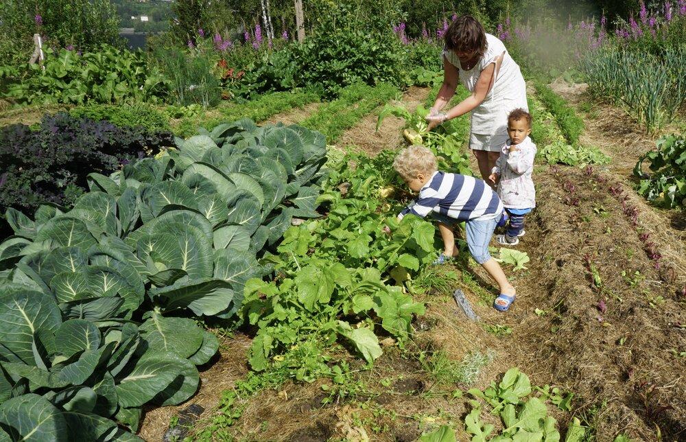 Nye generasjoner følger etter bestemor i kjøkkenhagen. Foto: Anders Nordrum