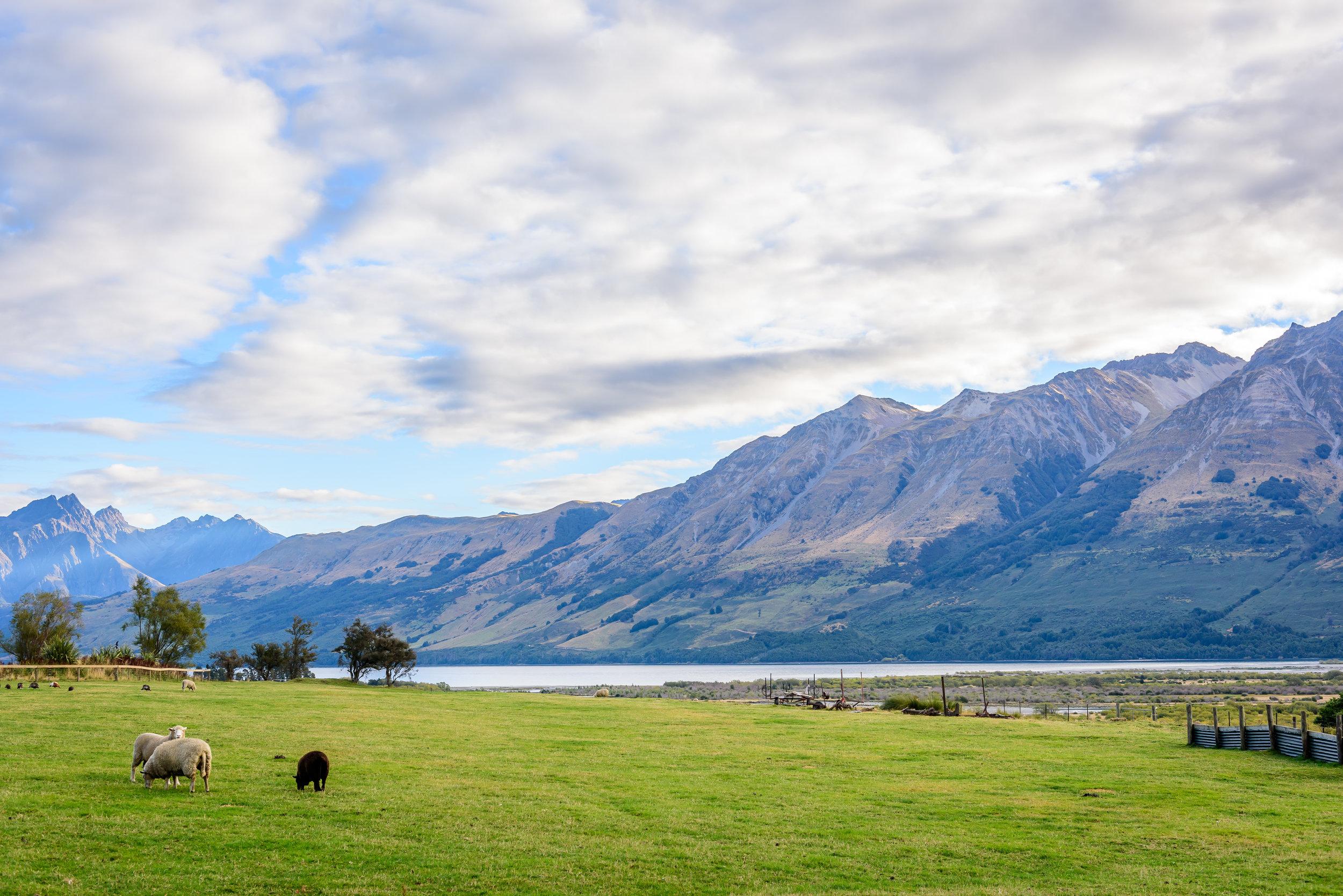 NZ-223.jpg