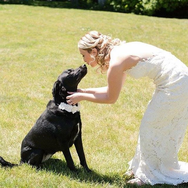 New rule. All my brides must be dog people. Thank you for your understanding. 👰🐶❤️ . . . . #mua#makeup#wedding#weddings#weddingmakeup#weddingmakeupartist#bride#bridal#bridalmakeup#trending#love#blogger#dog#dogpeople#instadog#doglovers