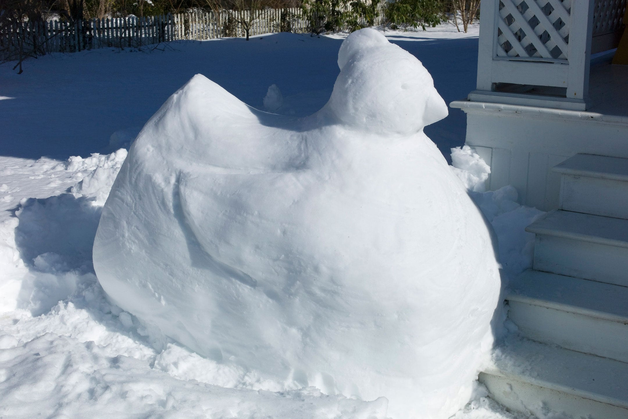 Snow-Chicken