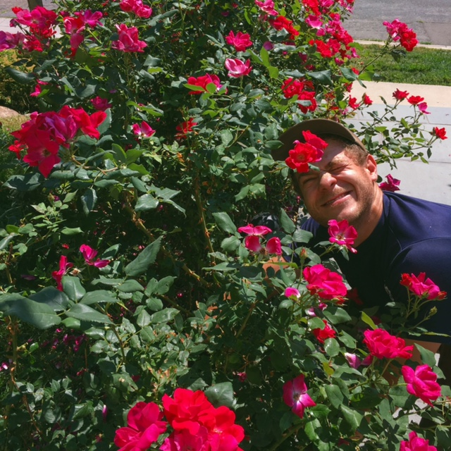 The roses are beautiful, but a gardener has to be willing to struggle through a little discomfort in order to keep them that way.