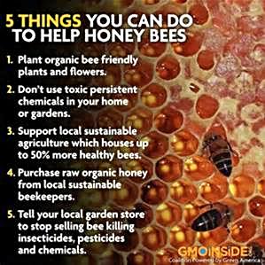 help bees.jpg