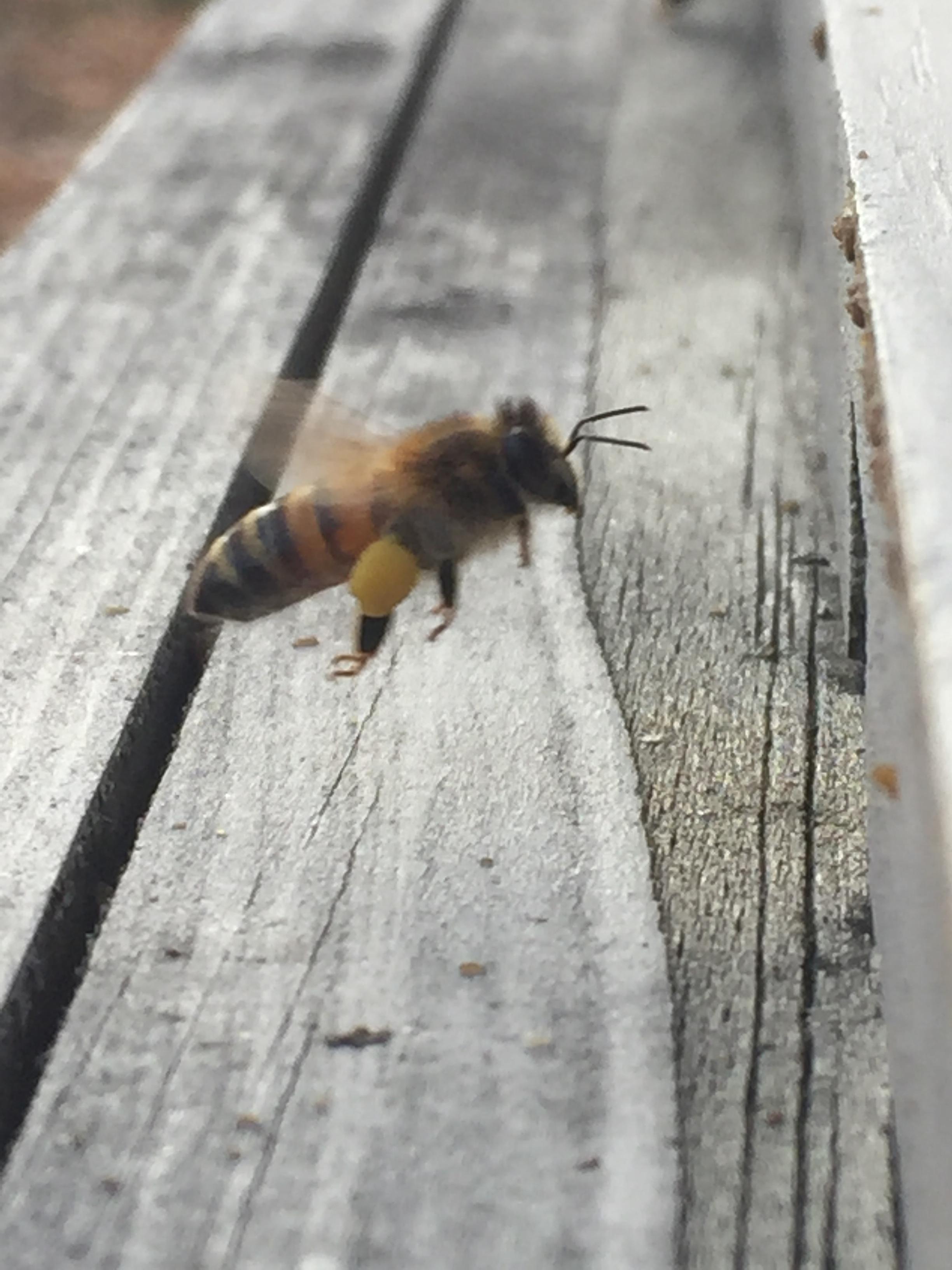Bee Kids (3).JPG