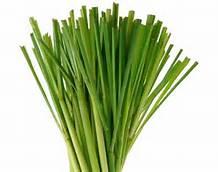 lemongrassplant.jpg