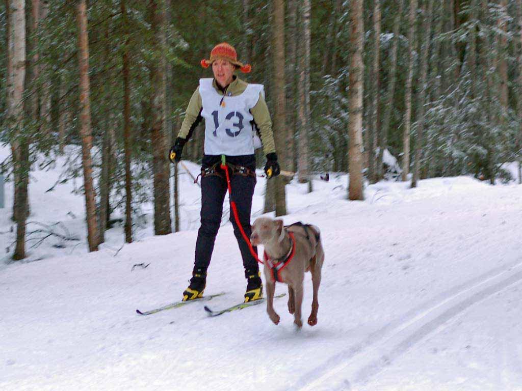 Skijor-Chugiak-10Dec06-079.jpg