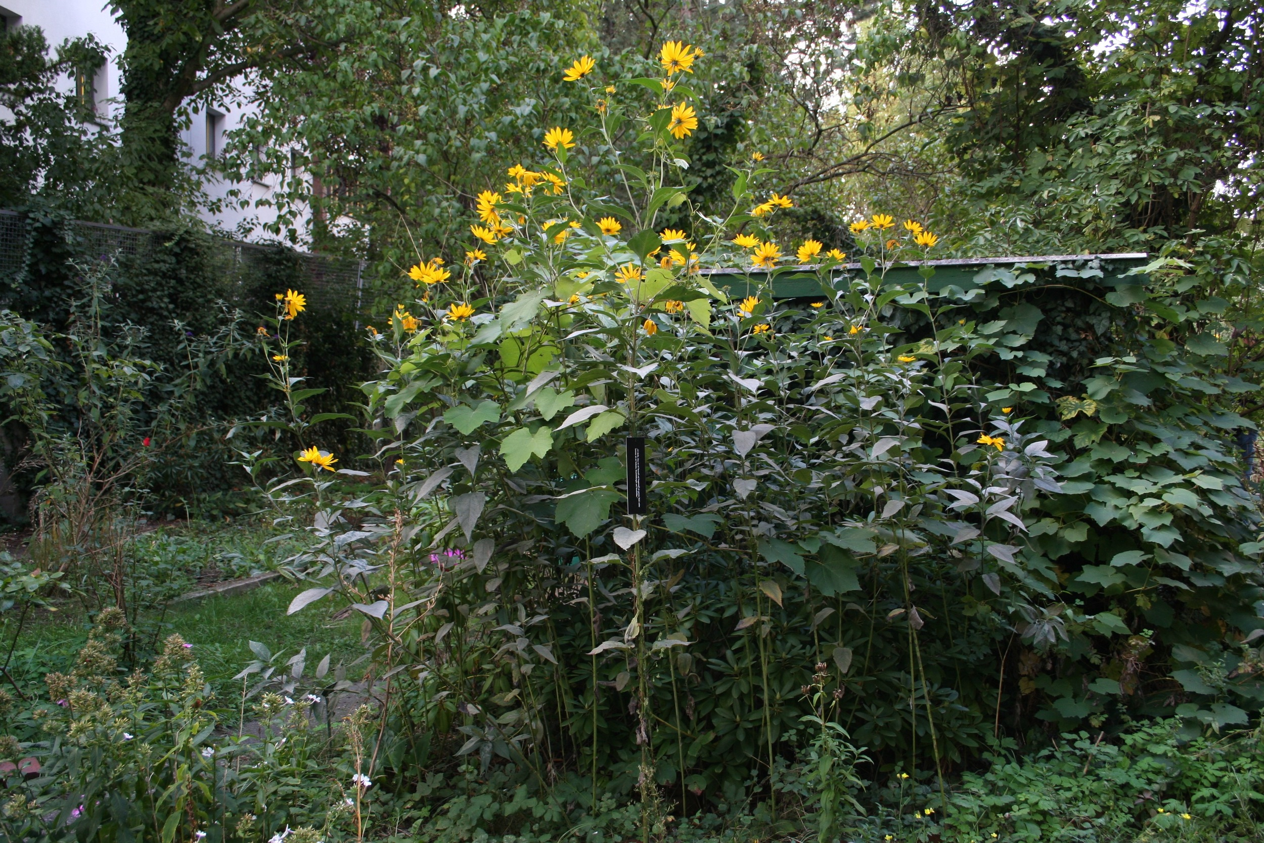 Comments on Our Garden, 2015