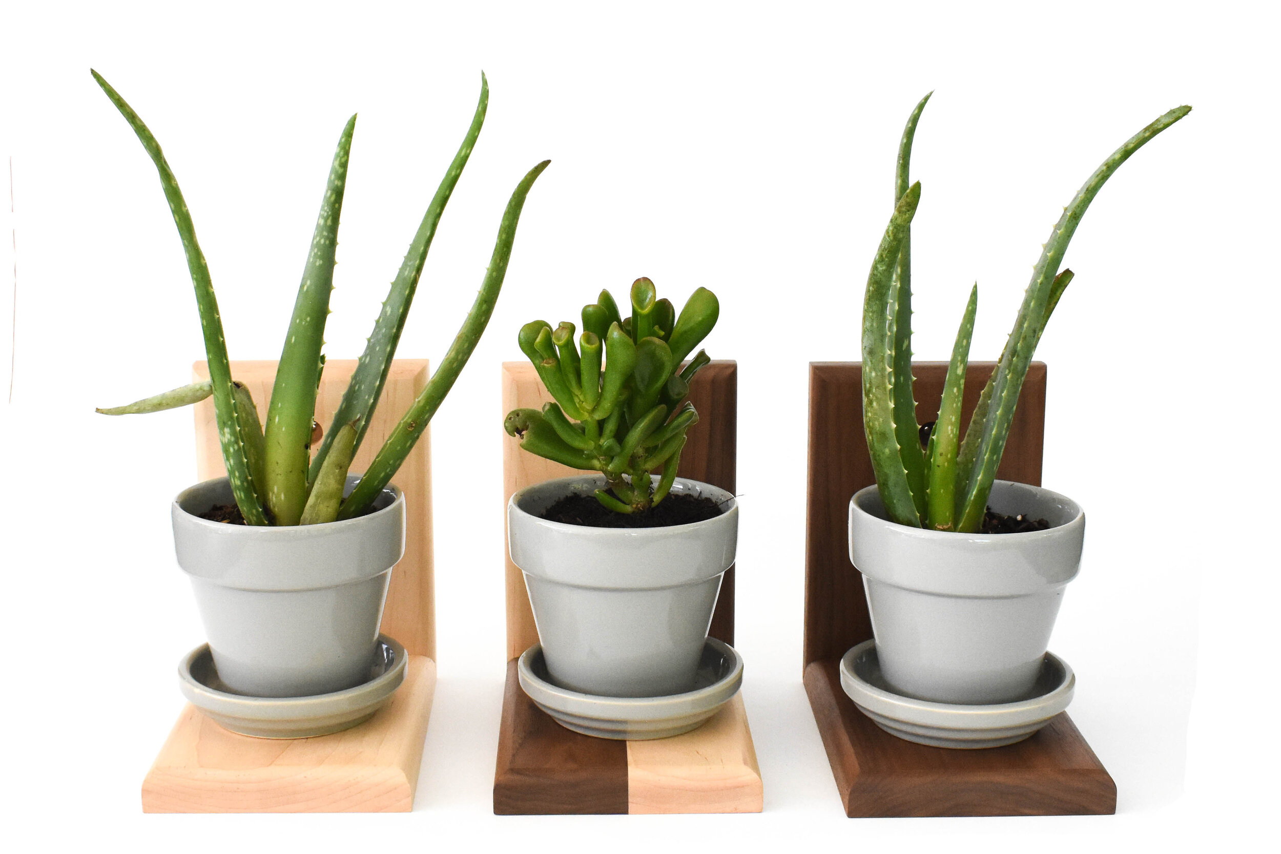 shelveswithplants.jpg