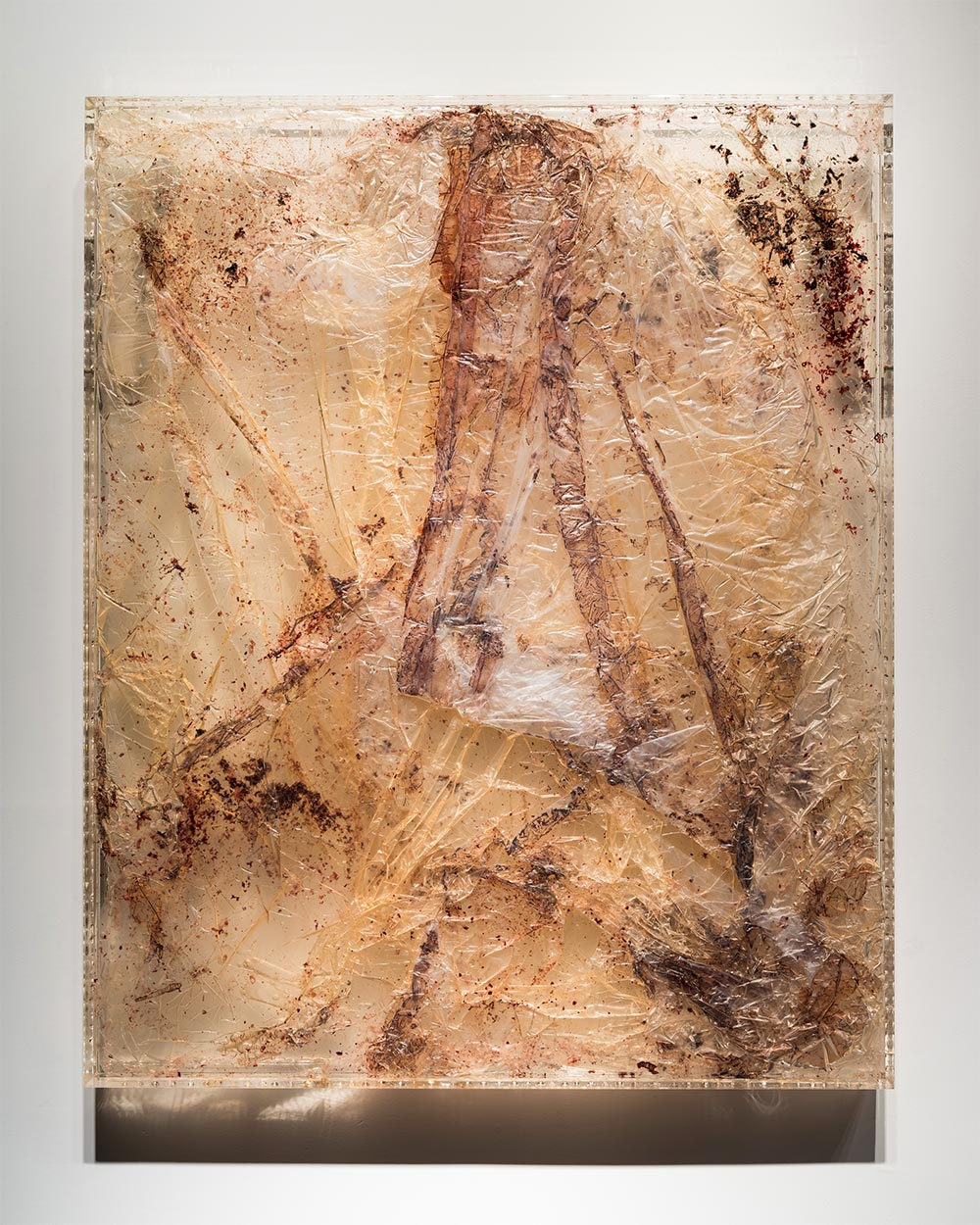 """BT1,   2016  44 x 36 x 3""""  blood, plastic tarp, preserved on plexiglass, UV resin"""