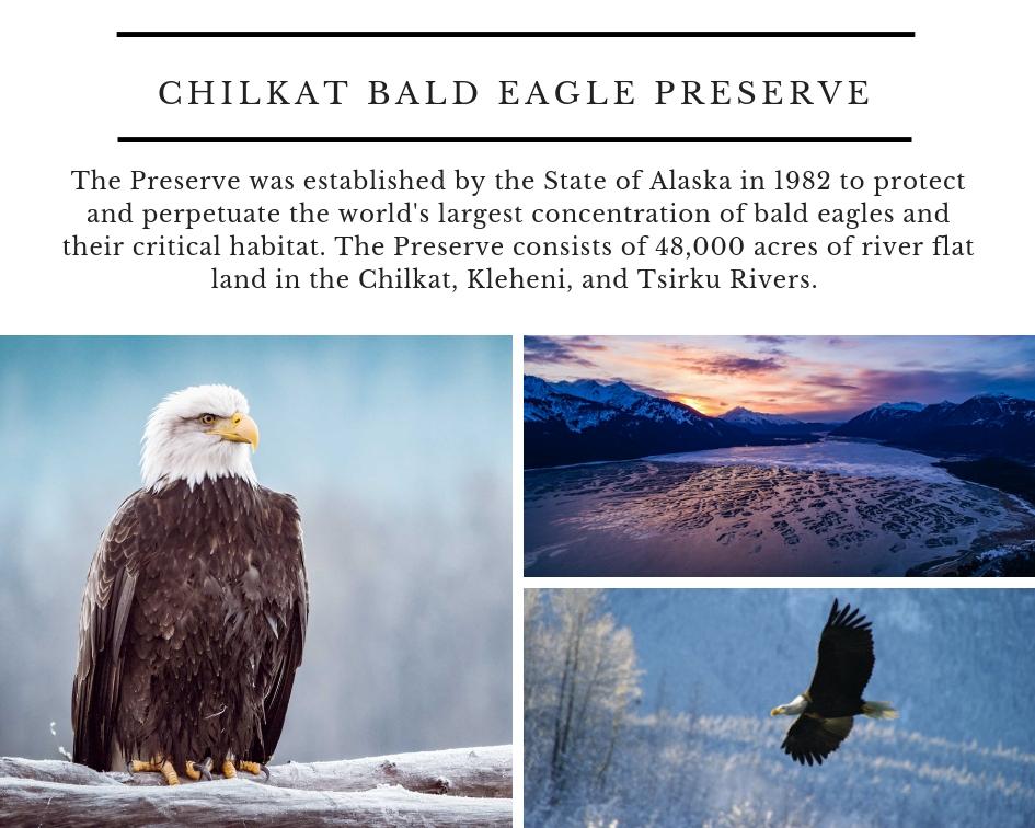 Chilkat Bald Eagle Preserve (2).jpg