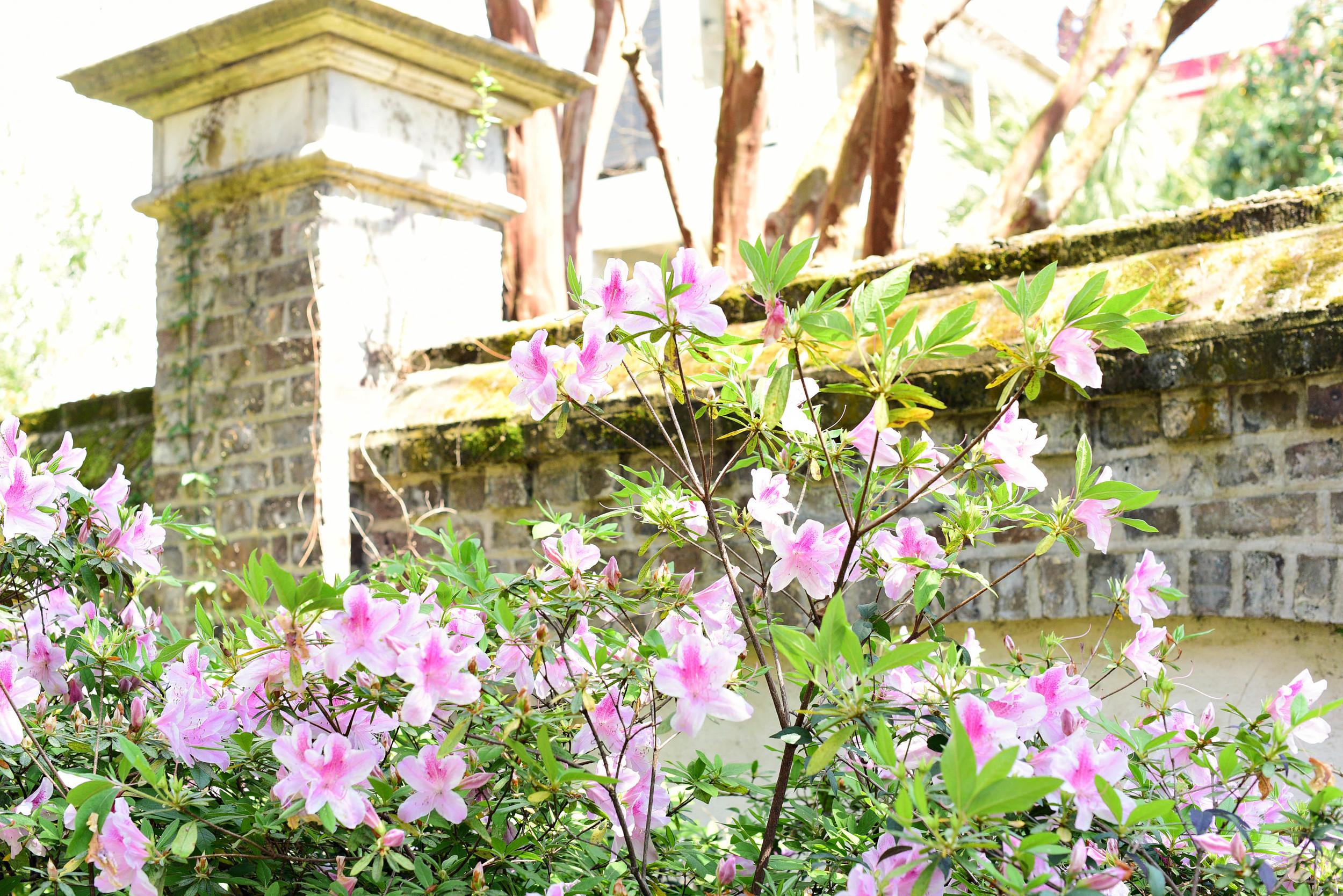 Charleston 06.jpg