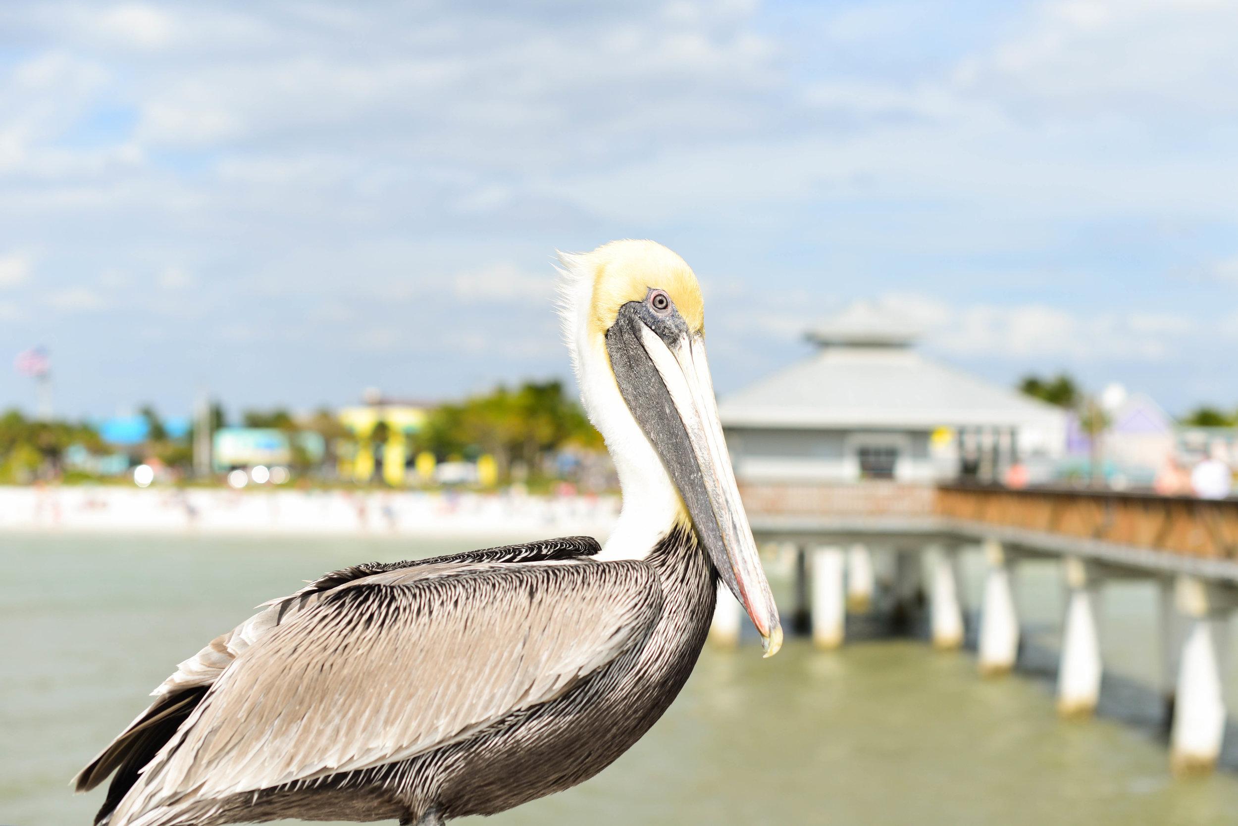 Fort Myers 18.jpg