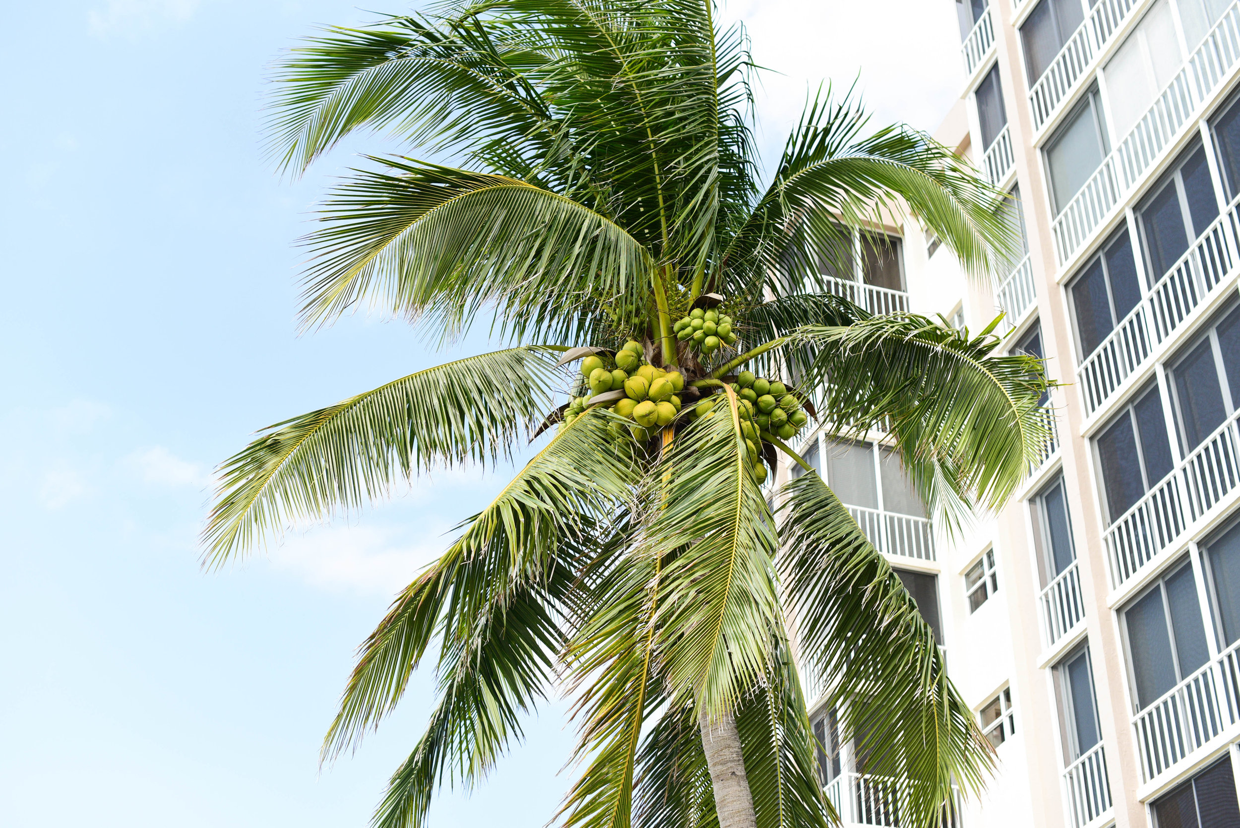 Fort Myers 19.jpg