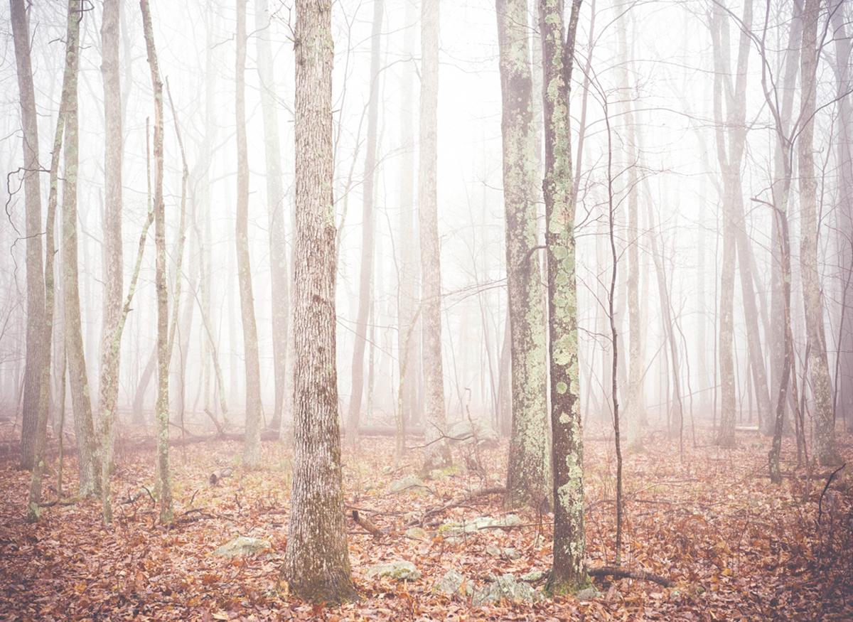 Pocono Mountains of Pennsylvania - Pocono Photographer, Jill Nobles of SmilePeaceLove.Photography