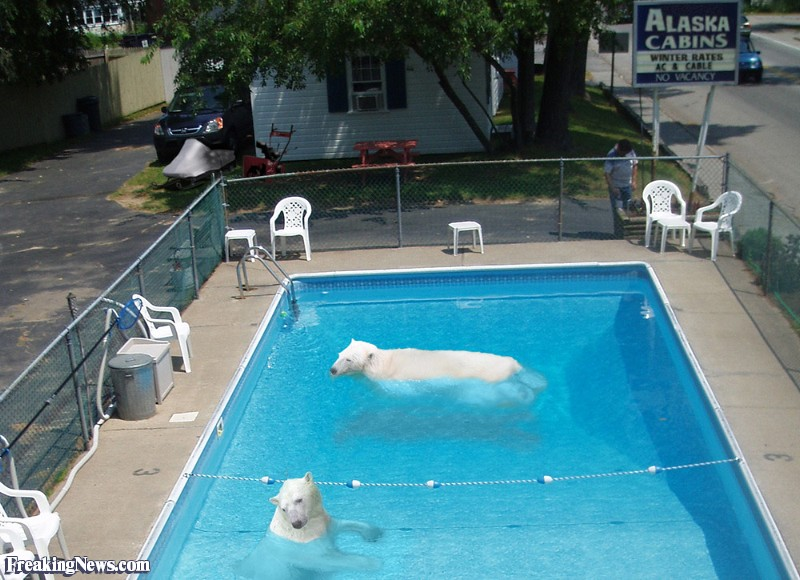 Polar Bear Swim.jpg