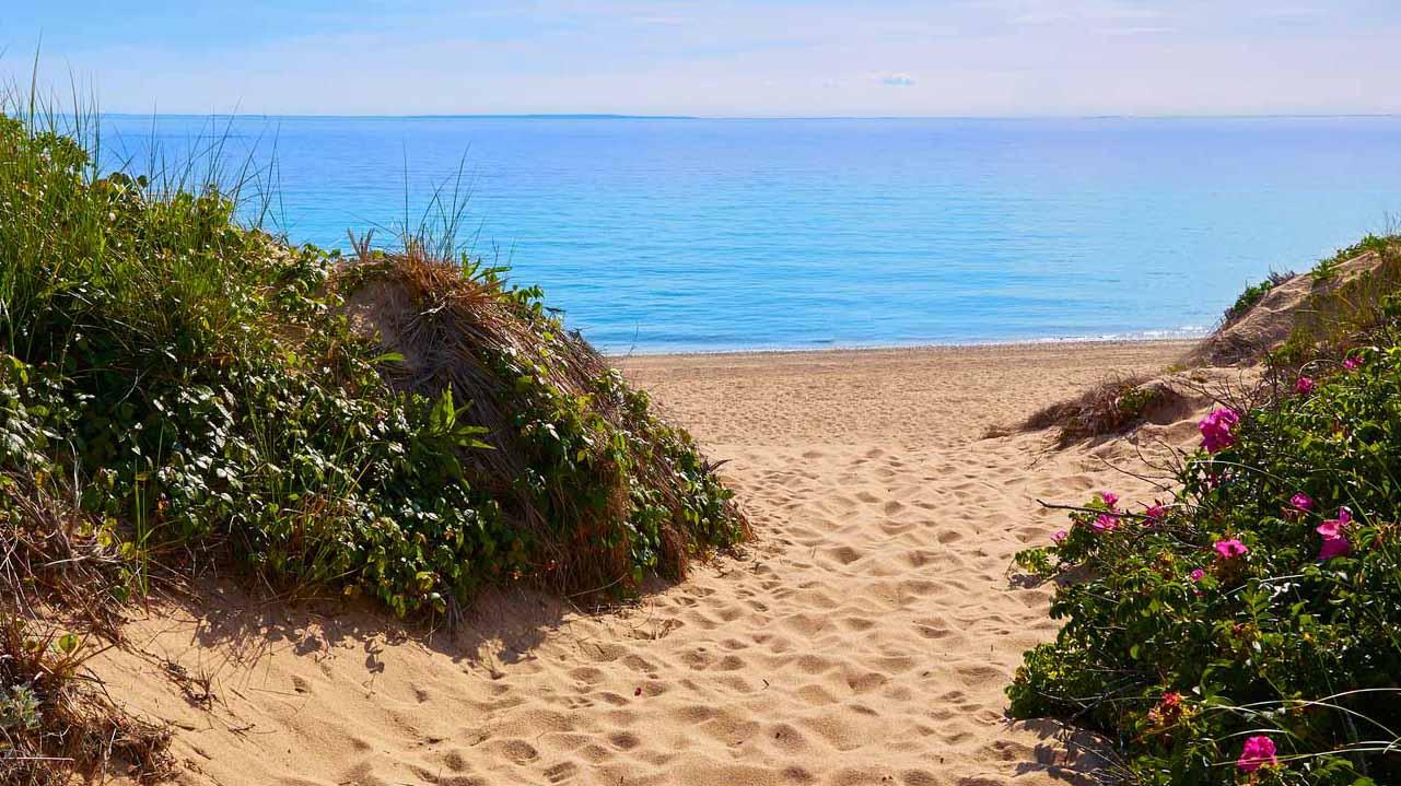 BeachRosesC.jpg