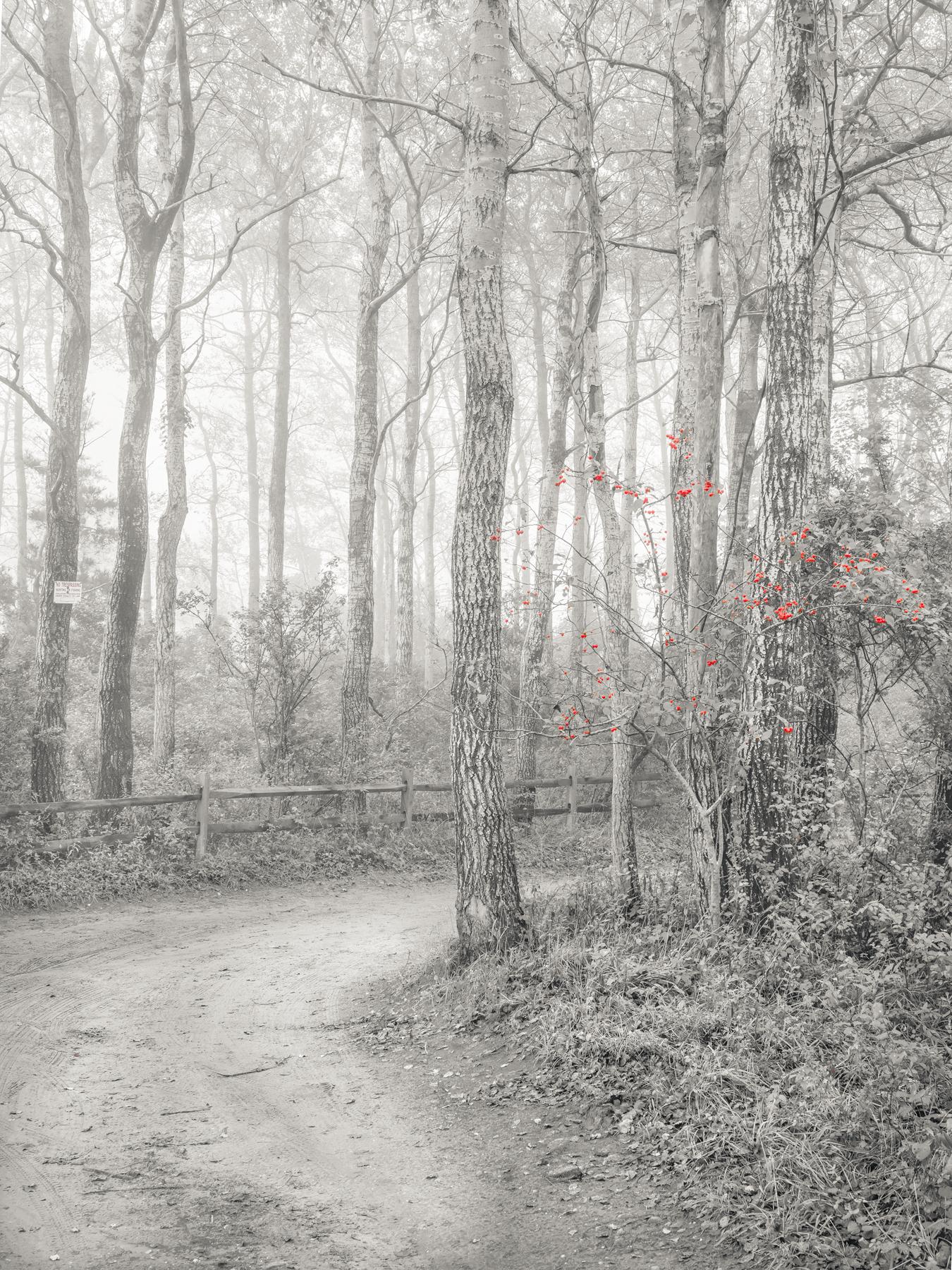 Poplar Trees / October A8284
