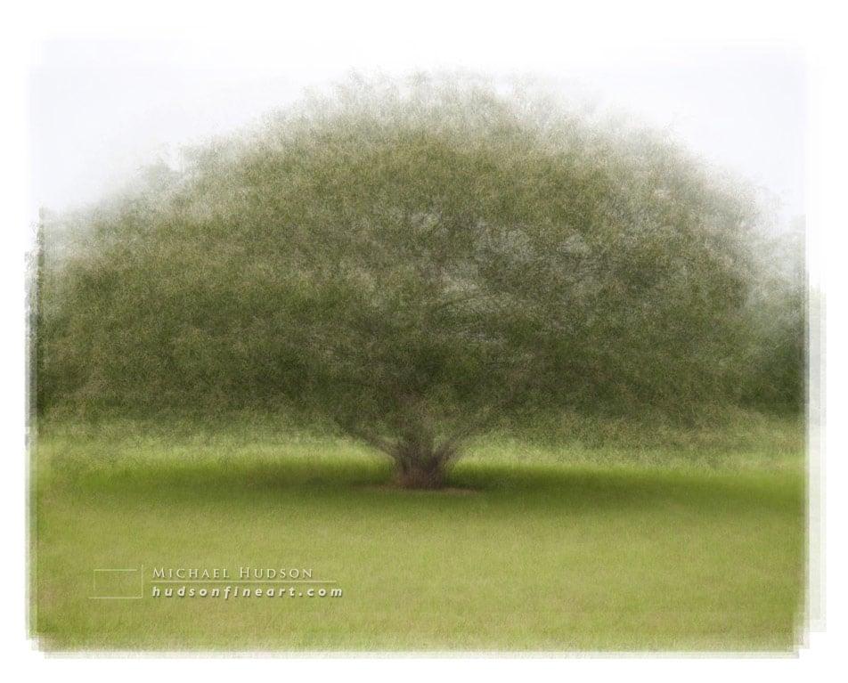 arby-tree-jul2015-7.jpg
