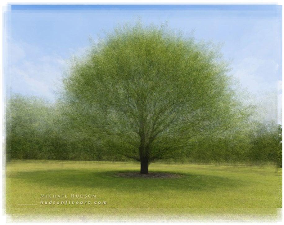 arby-tree-jul2015-11.jpg