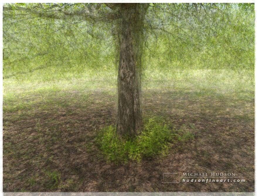 arby-tree-jul2015-10.jpg