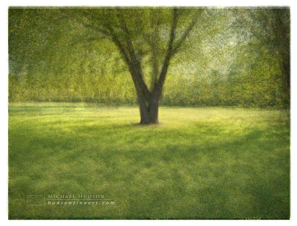 arby-tree-sept2015-7.jpg