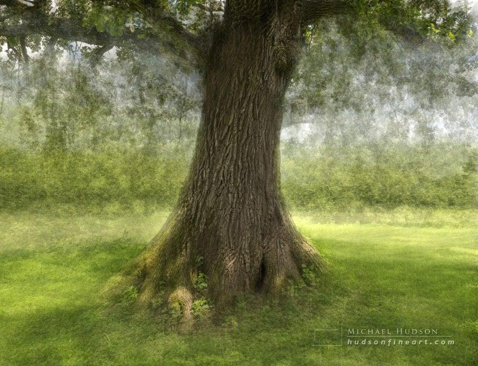 iowa-tree-aug2015-3.jpg