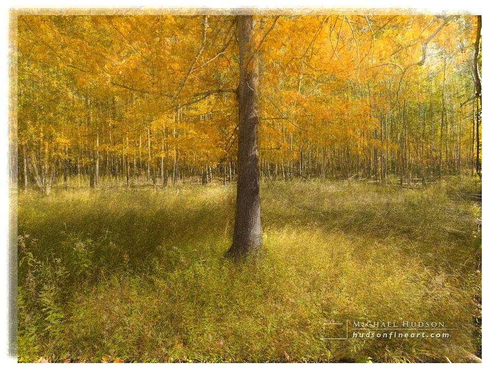 acadia-tree-collage-5.jpg