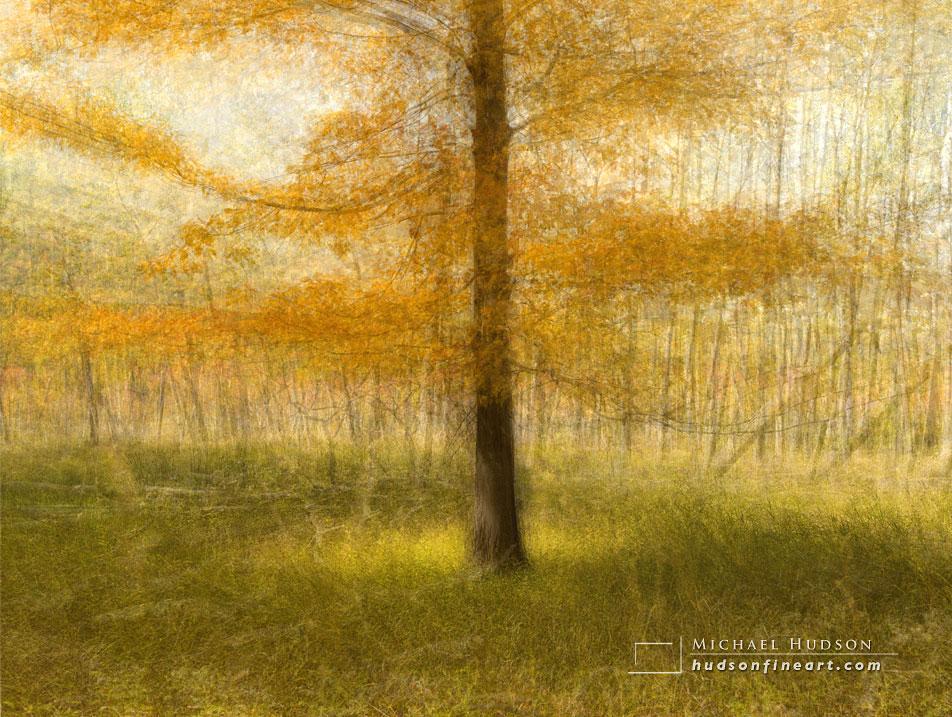 acadia-tree-collage-4.jpg
