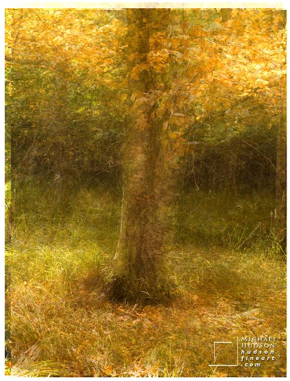 acadia-tree-collage-1.jpg