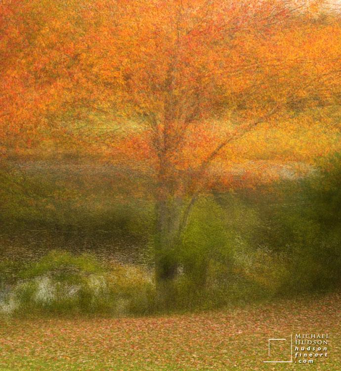 acadia-tree-collage-6.jpg