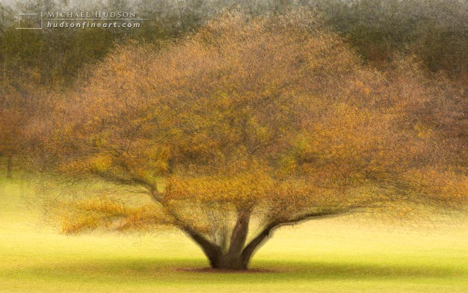 arby-tree-oct2015-16.jpg