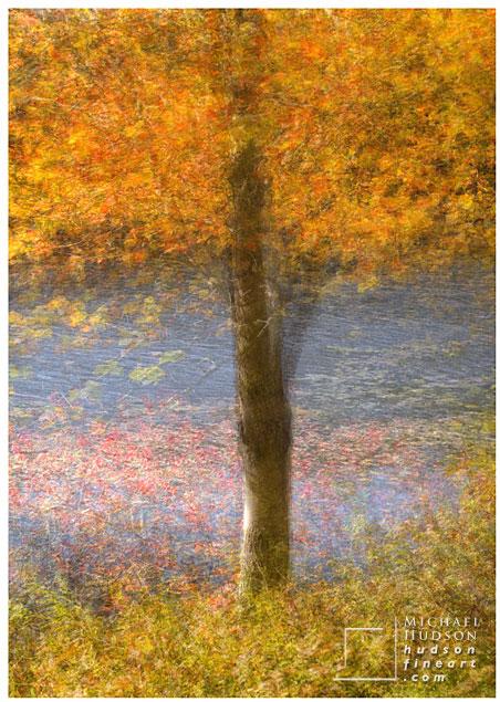 acadia-tree-collage-14.jpg