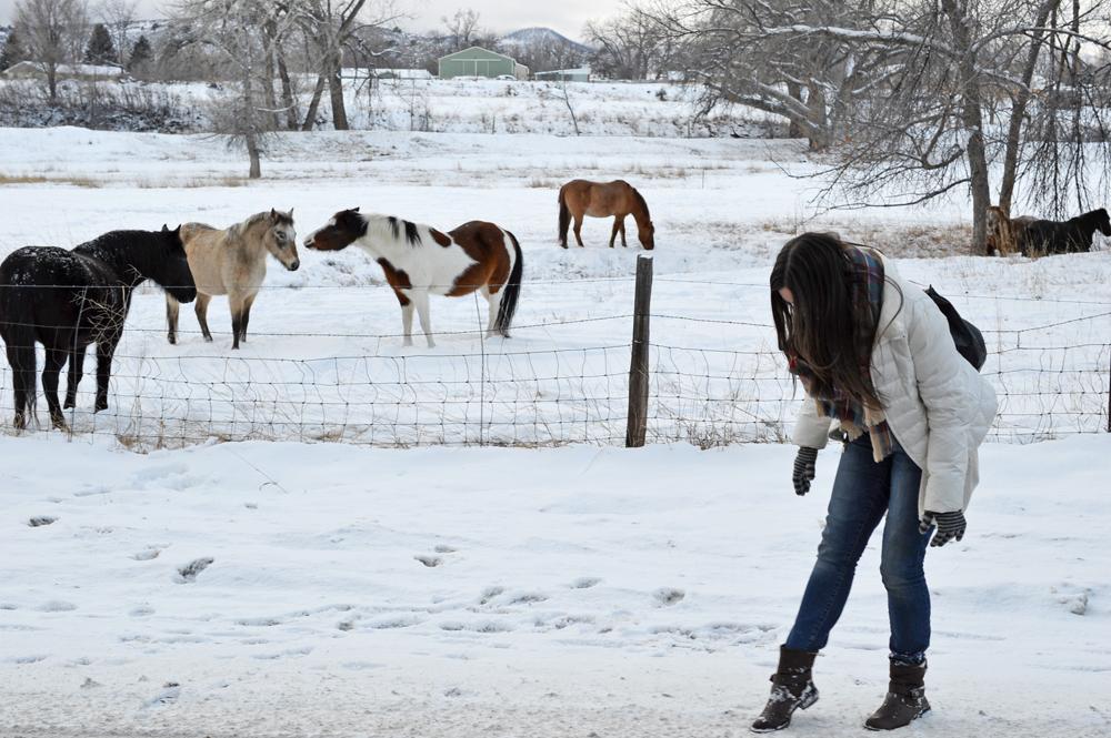 Denver Horses 4