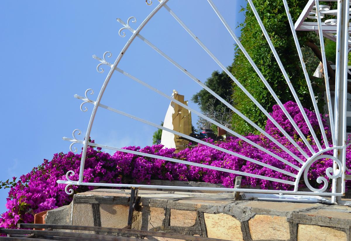 Purple Flowers Amalfi