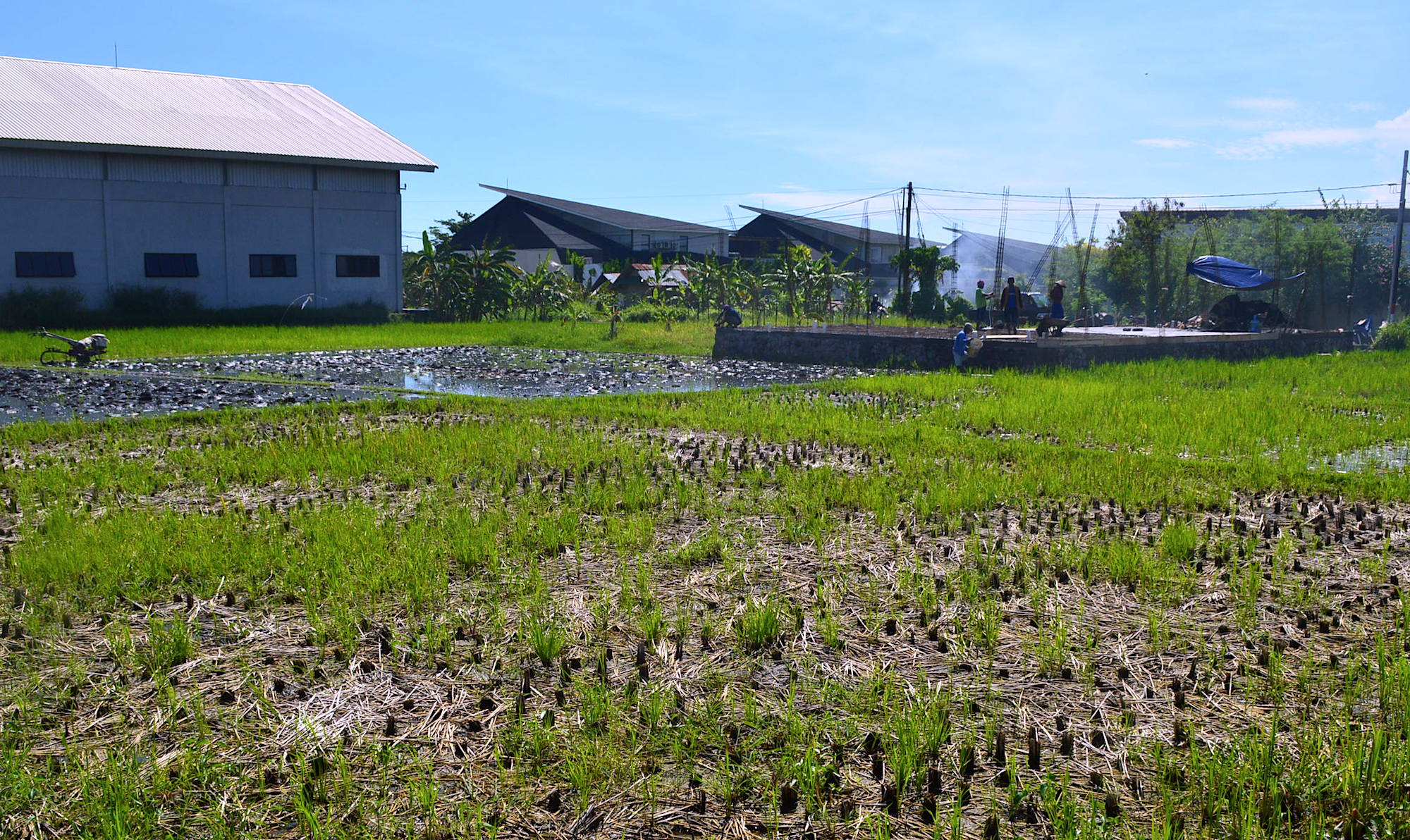 Our villa was next to a rice field and a short walk from cafes, shops, convenience stores, and a beach club