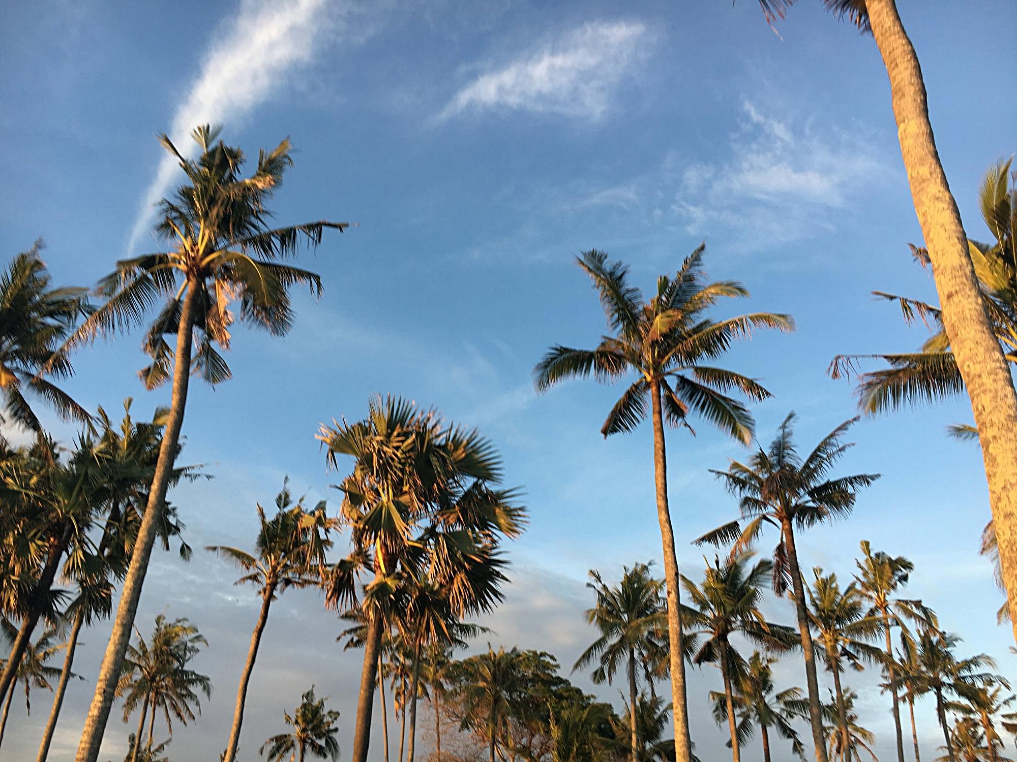 Palm trees at Finn's beach club in Canggu, Bali! 14 fun things to do on your trip to Bali!
