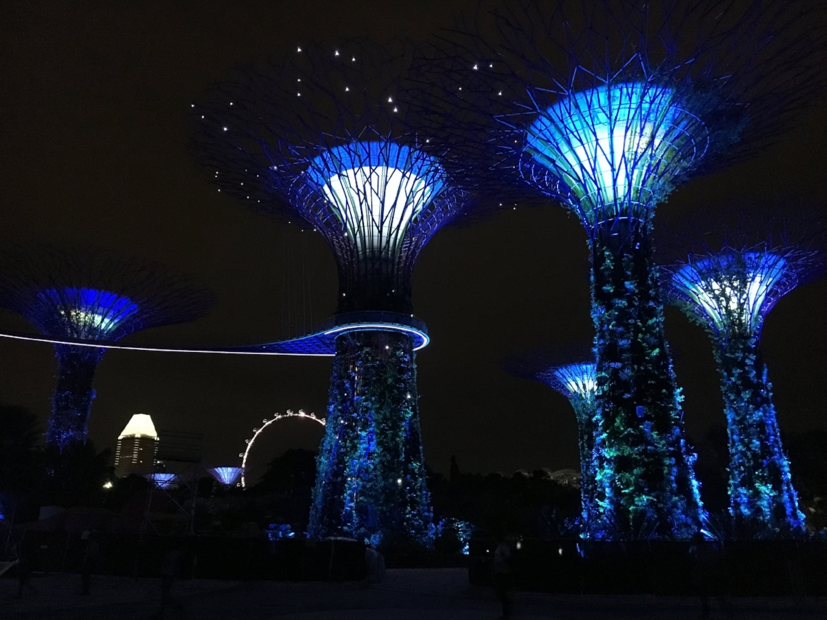 Layover in Singapore - Singapore-Super-Trees-Lights-at-Night