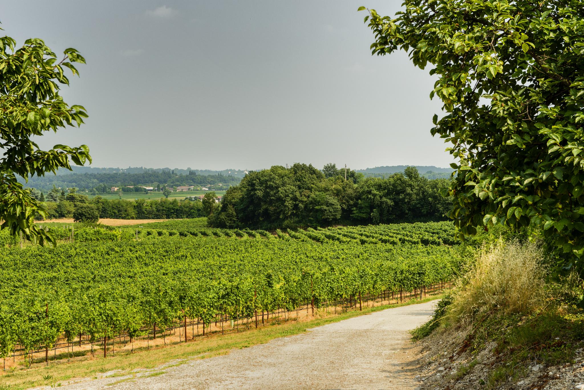 10 Reasons why you should visit Virginia's Shenandoah Valley! Beautiful east coast USA getaway | GoSeekExplore.com