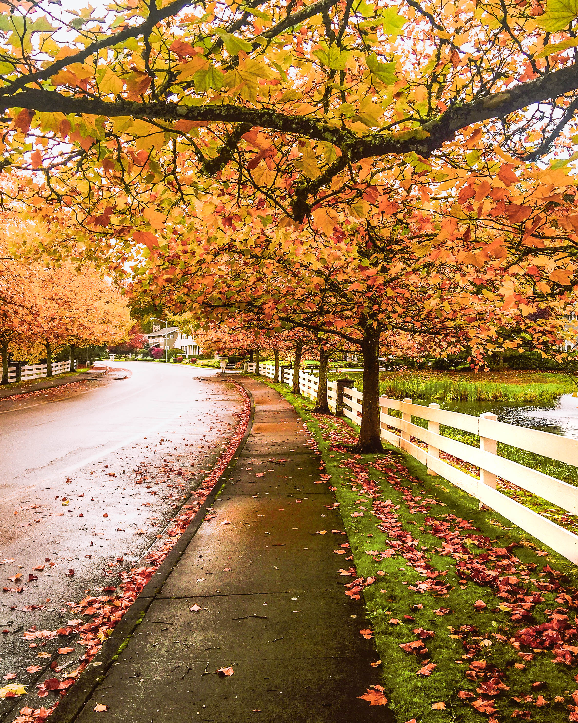 Fall Leaves in Seattle, Washington state