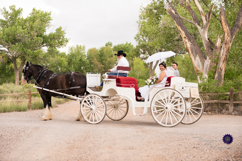 Best Wedding Photographers in Albuquerque | Hyatt Regency Tamaya Wedding  | Wedding Couple on Horse Drawn Carriage