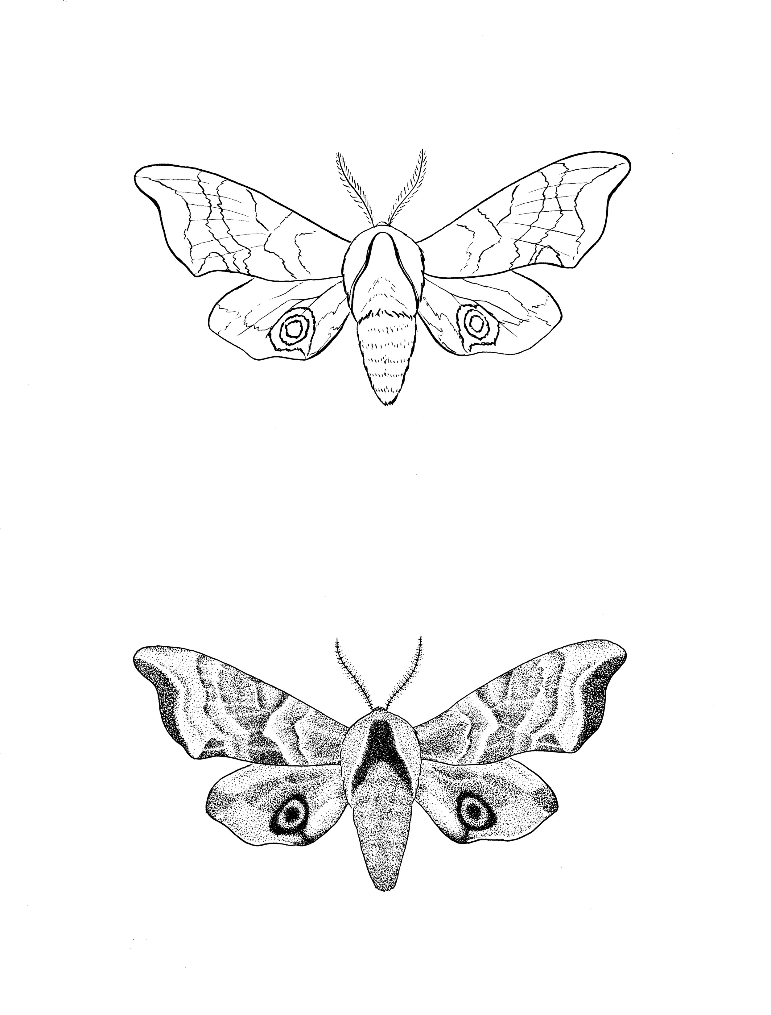 moths1 crop jpeg.jpg