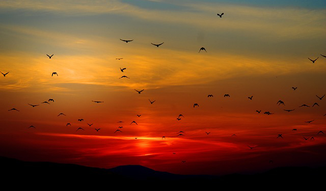 05-sunset-birds.jpg