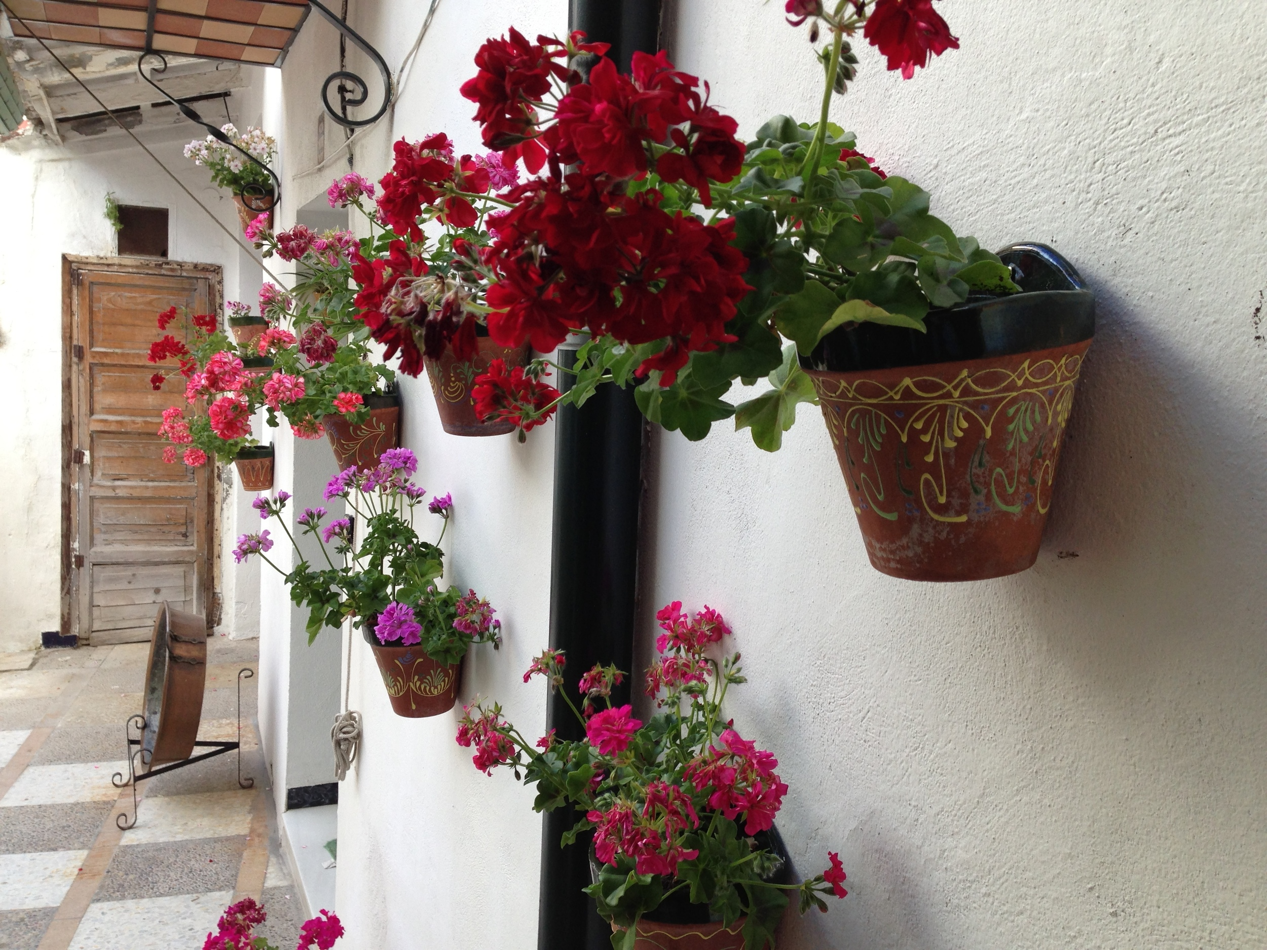 Flowers on the patio