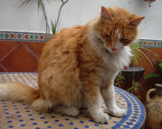 Lailo the flamenco cat
