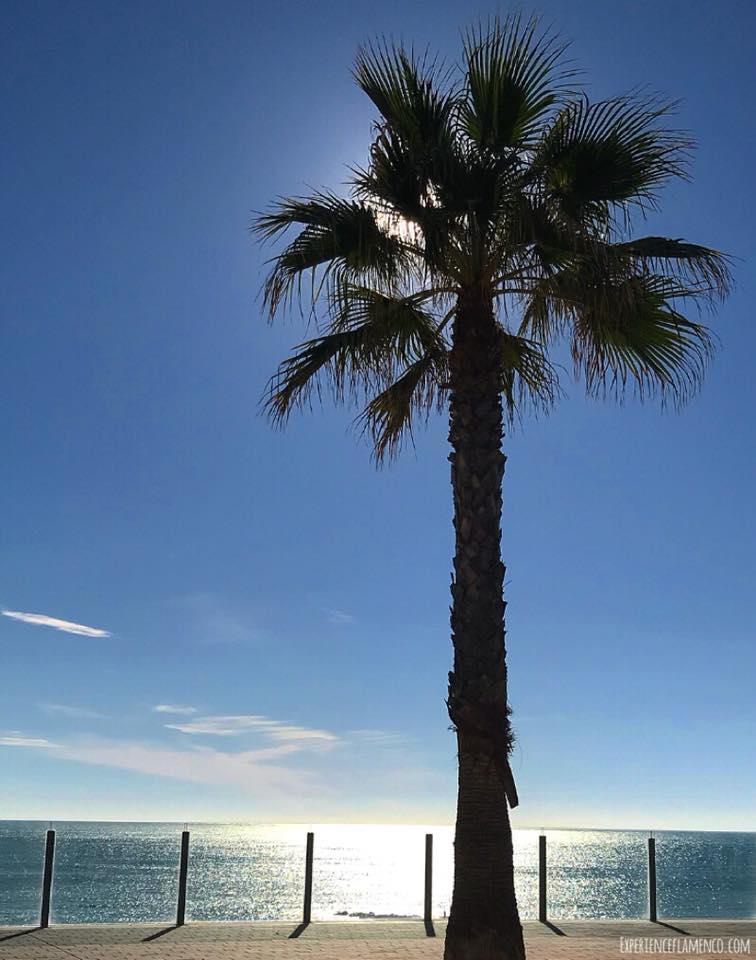 Palm tree in Cadiz.jpg
