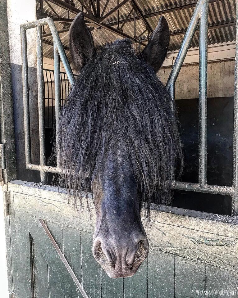 slash horse.jpg