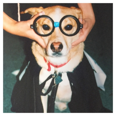 "homerthewondermutt dressed as ""hairy"" potter."